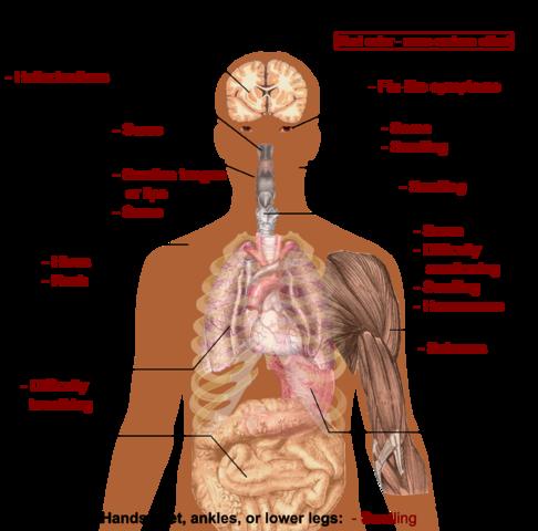 Mulige bivirkninger ved bruk av tramadol - Foto Wikimedia